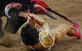 Bull-vs-matador