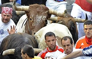 Bulls_2