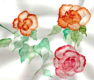 Roses_8_20_2010