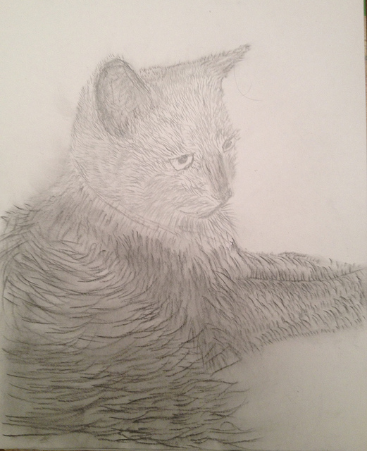 MisterKitty_charcoal800